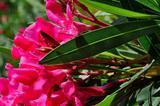 Комнатные растения декоративнолиственные и цветущи